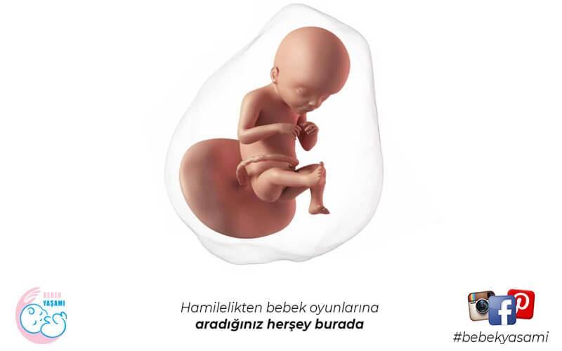 19 Haftalık Hamilelik